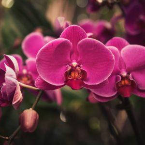 Pink symmetrical flower